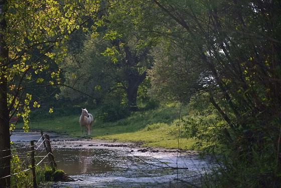 Cheval près de la gravière,Bischwiller