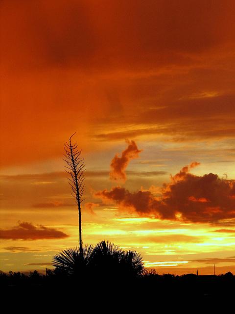 Sotol Sunset