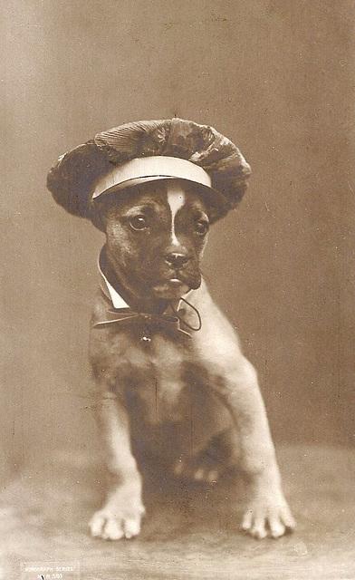 Sailor Hat Dog