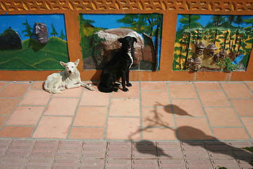 Two Dogs in Gatapé