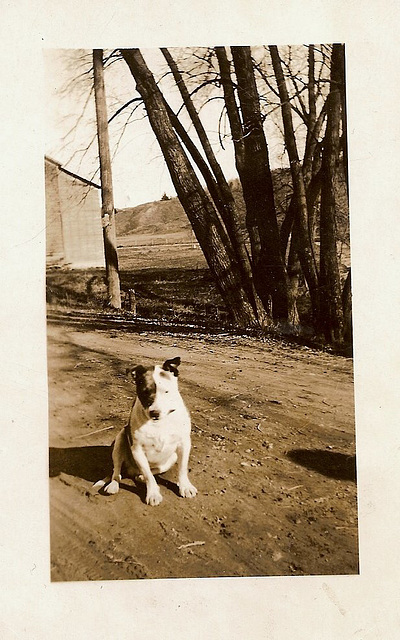 Dirt Road Dog