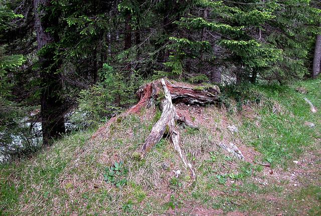 Holiday day 4: tree stump