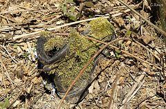 Moss Lined Boot