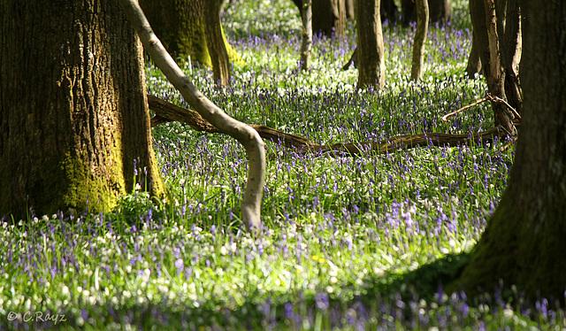 Marline Wood