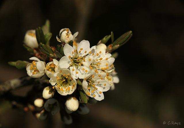 Springyness