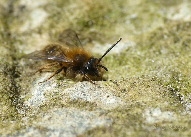 Minning Bee