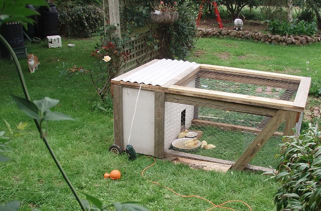 ducklings' new garden enclosure