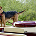 Narrowboat dog
