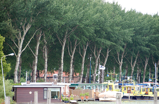 A trip with the steam tug Adelaar: trees along the Vecht