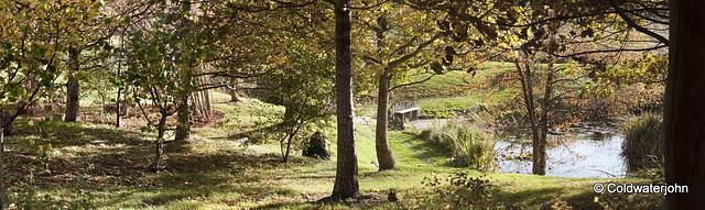 Sunlight through the oaks