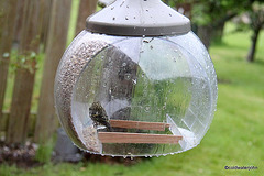 Bird Brains: This contraption is so ingenious most birds can't even figure out how to get into it!