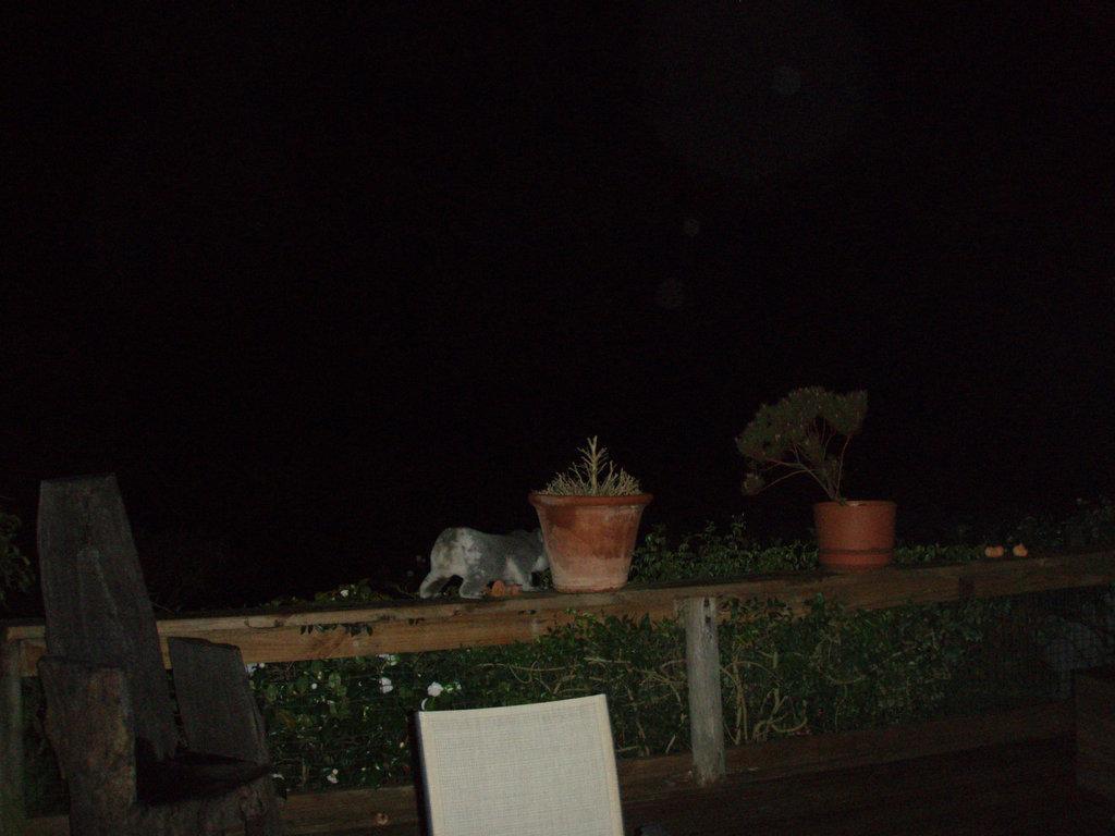 koala on our decking