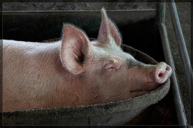 Jackson County Fair: Bucket o' Pork