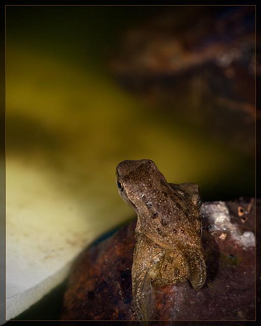 Lucky's Pond: Froglet Pile