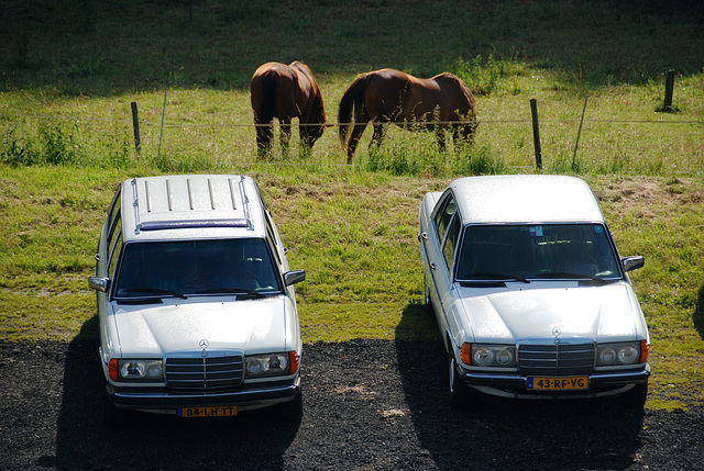 A weekend in the Eifel (Germany): Two horses and 185 horses