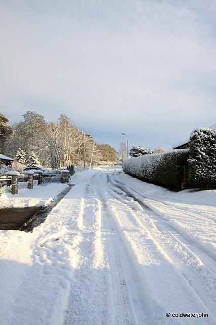 Sun and snow - garden walk Dec 10 2011