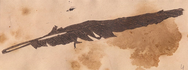 feather dry-point 04