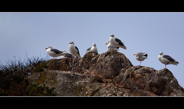 Seagulls Hanging Out in Brookings