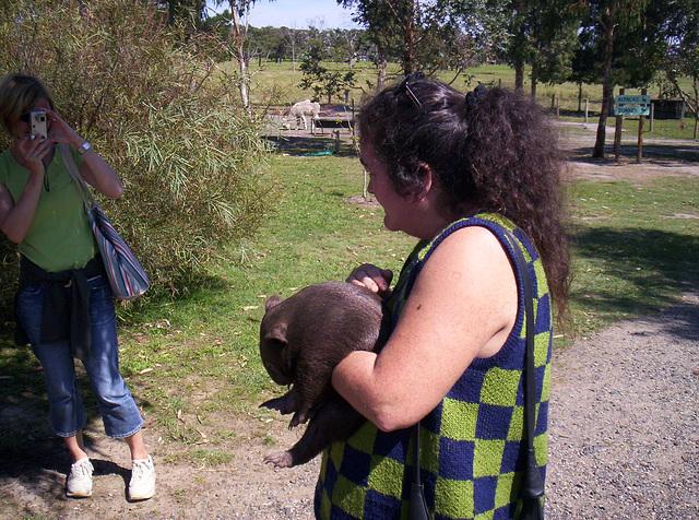 baby wombat Tess & Sandy