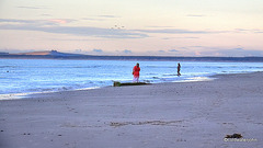 Findhorn Beach - watching the seagulls