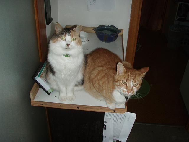 Leeloo & Zetor on the kitty platform