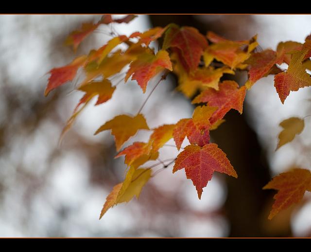 Autumn Beauty at Palmerton Arboretum