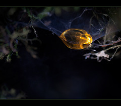 Resin Droplet Caught in Web!!