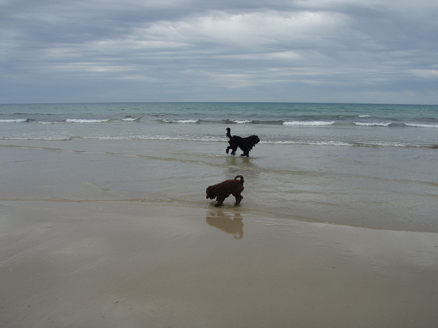Coco's first visit to the beach