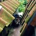 Cat in a gutter