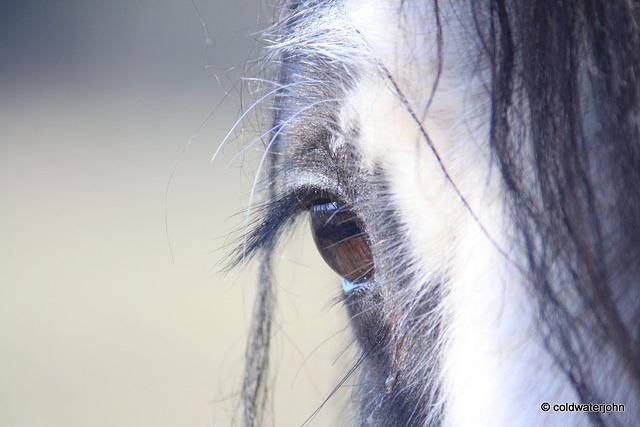 So you think you've got long eyelashes?