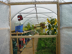 Battlesteads polytunnel