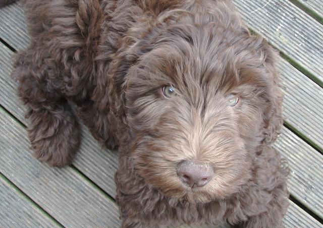 Coco at 11 weeks