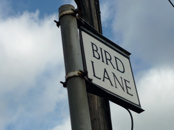 Bird Lane