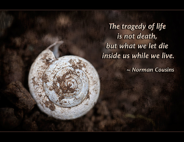 """The tragedy of life is not death, but what we let die inside us while we live."" ~ Norman Cousins"