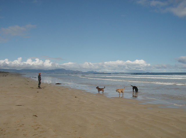 doggy fun at Sandy Point