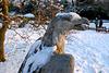 Icy eagle