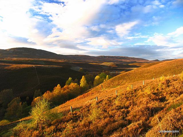 Dava Moor in Autumn