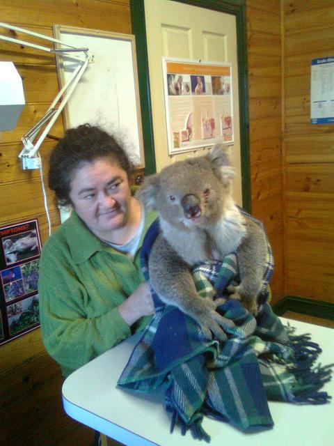 koala rescue!