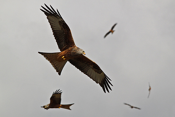 Bundle of Kites