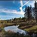 Klamath County: Brook in Deep Shadow