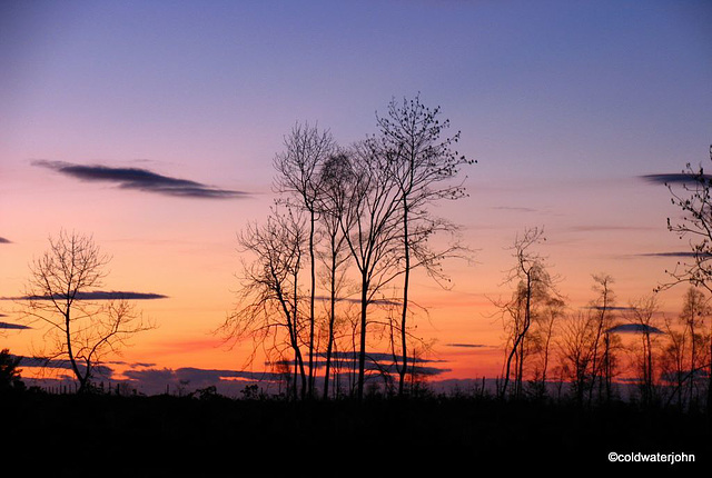 Trees silhouetted against the sky at dusk near Blervie Castle ruins