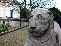 Lion keeping guard at the Provincial Government headquarters in Haarlem