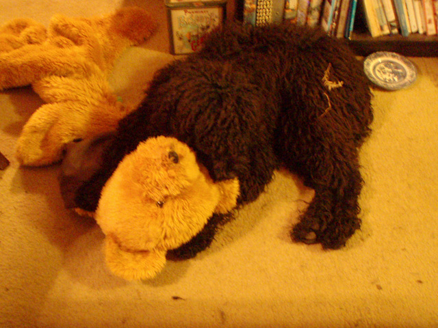 Fonzie's teddy bear rug