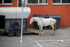 Train journey to London: Horse at a horse market at Mechelen, Belgium