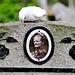 Kleverlaan Cemetery in Haarlem