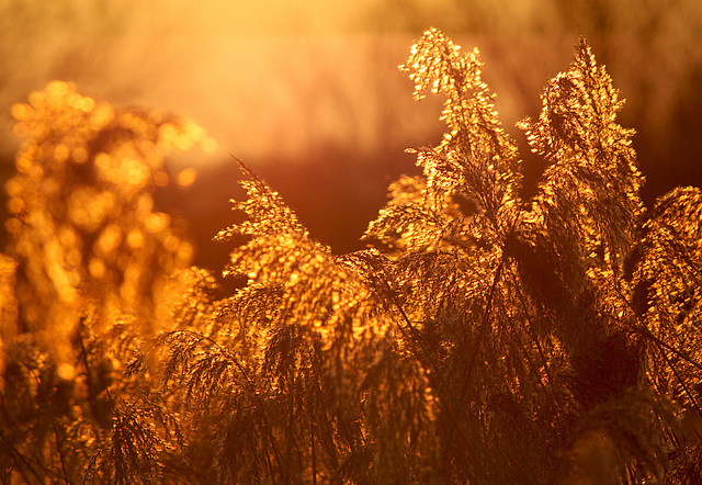 Golden Hour