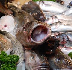 Borough Market: Fish