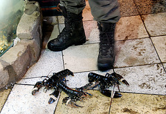 Borough Market: Lobsters