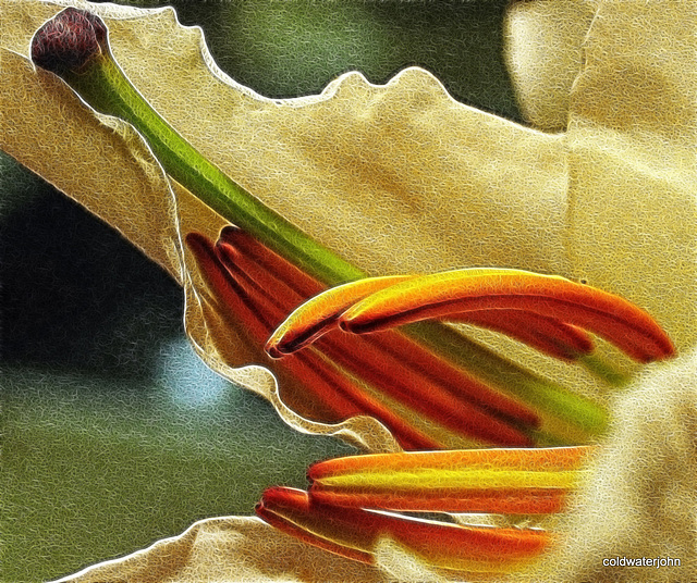 Garden Lily - Detail