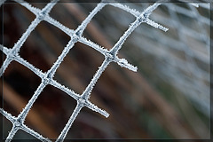 An Oldy but a Goody! Frosted Netting